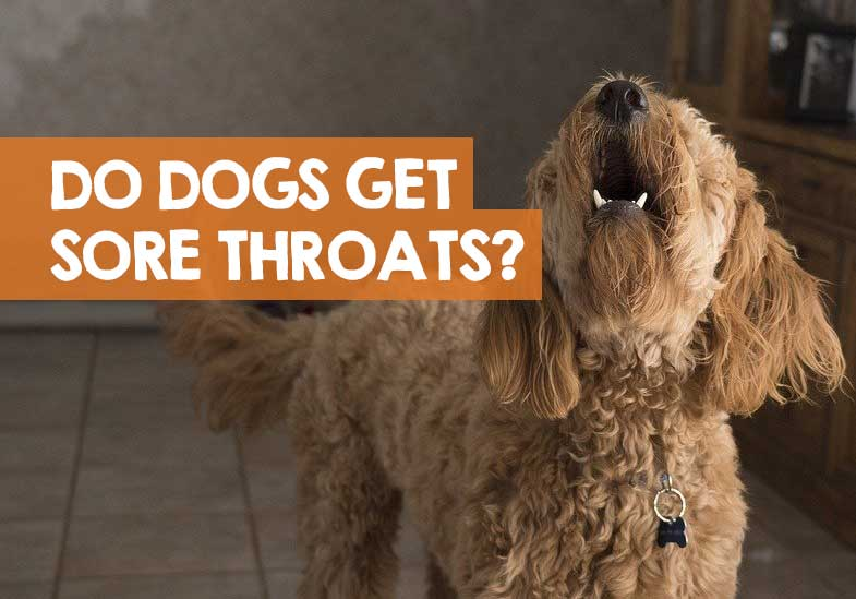 do dogs get sore throats from barking too much