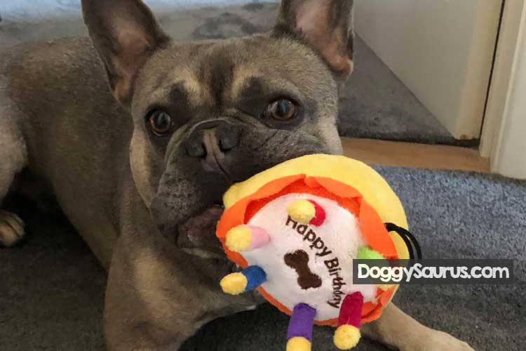 Should You Let Your Dog Hump Toys