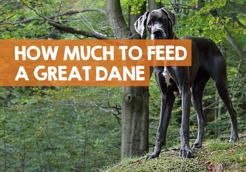 How Much Does A Great Dane Eat Per Day Month Feeding Chart