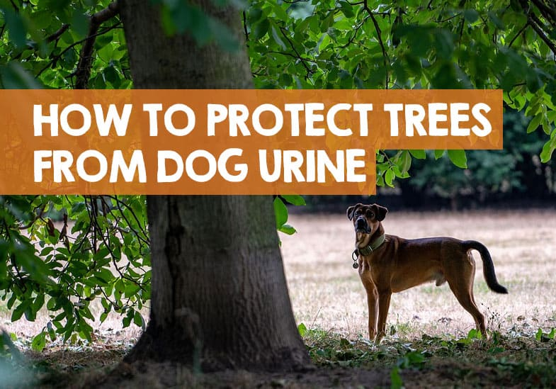 protect trees from dog urine