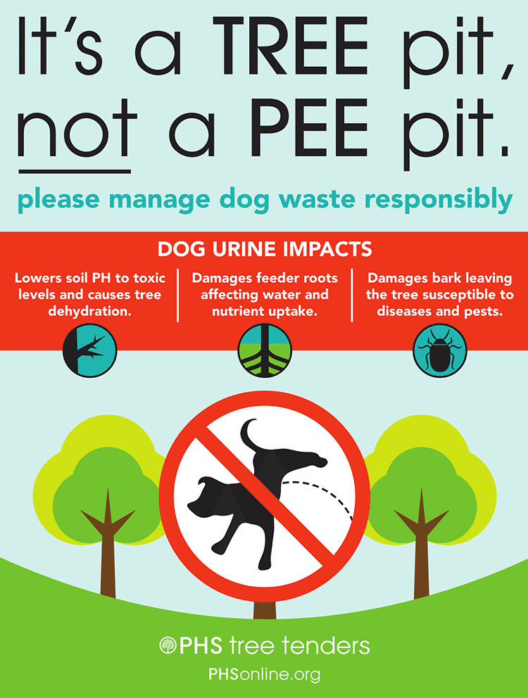 how to protect trees from dog urine