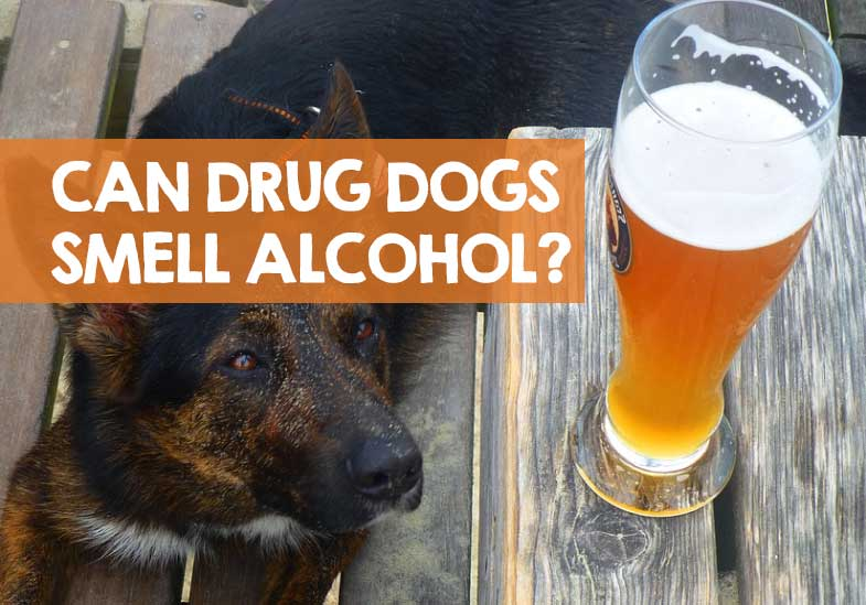 Can Drug Dogs Smell Alcohol and Beer