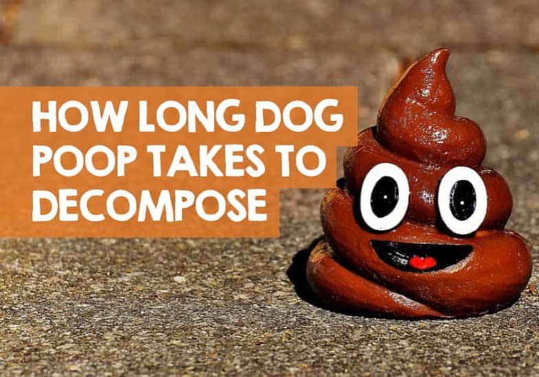 how long does it take for dog poop to decompose when buried
