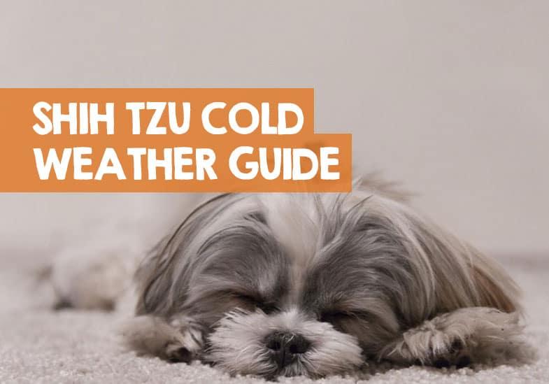 shih tzu cold weather