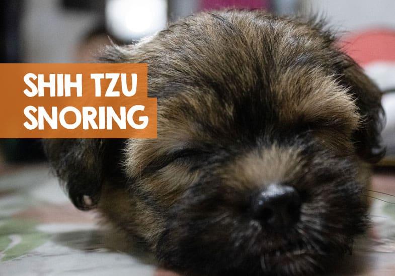 stop shih tzu snoring