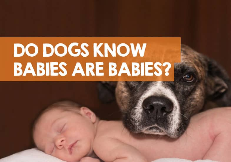 Do Dogs Understand What Babies Are