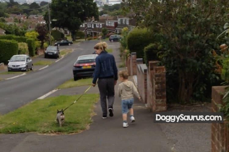 dog twisting body when walking