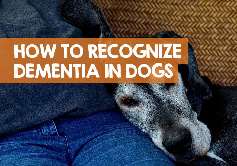 How to spot dementia in dogs