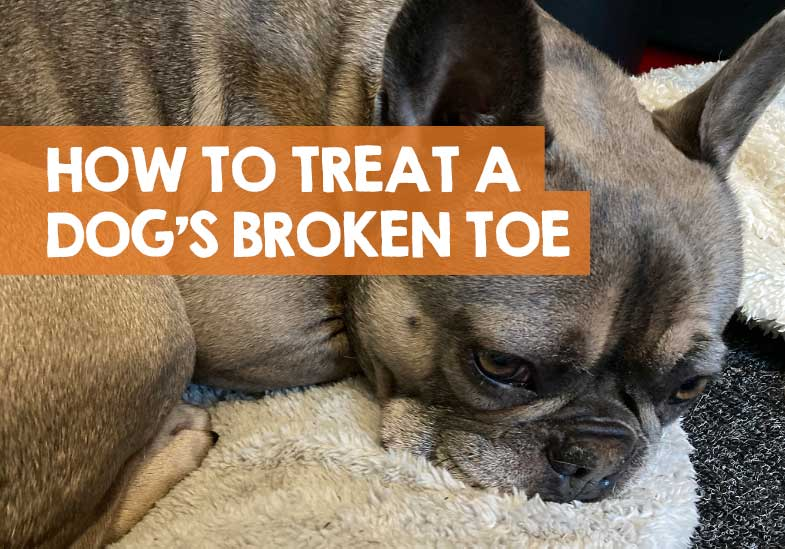What to Do if Your Dog Has a Broken Toe
