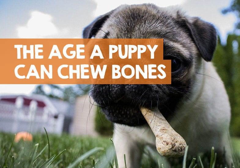 what can puppies have bones