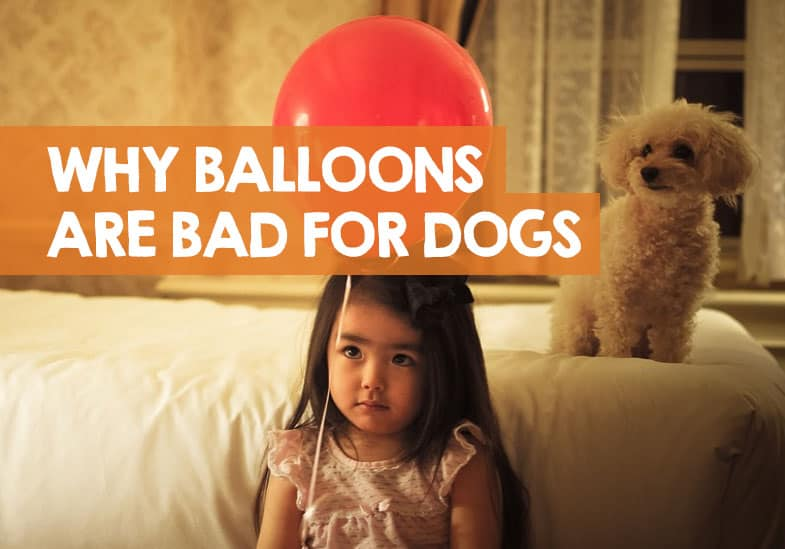 are balloons bad for dogs