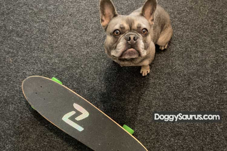 dog barks at skateboards