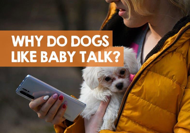 do dogs like baby talk