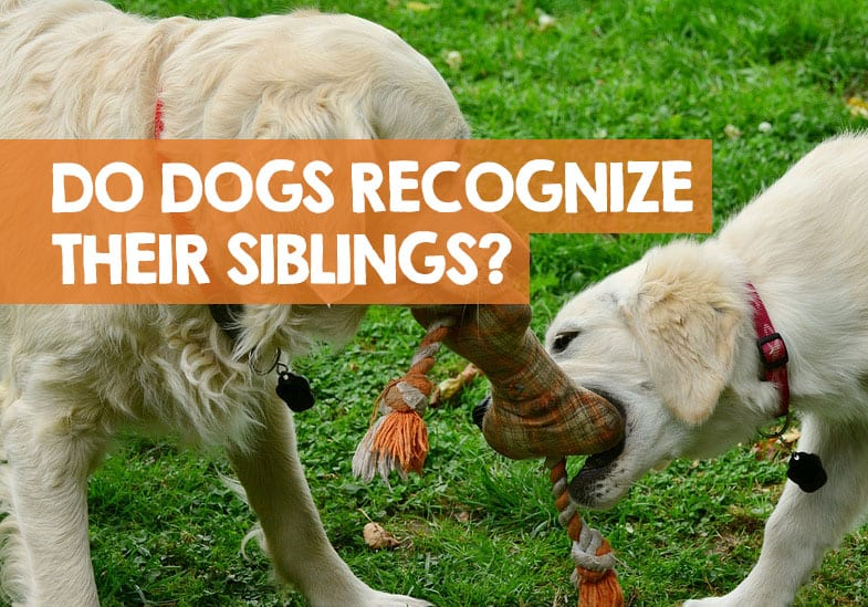 do dogs recognize their siblings