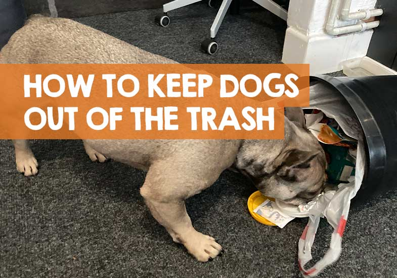 how to keep dogs out of trash cans