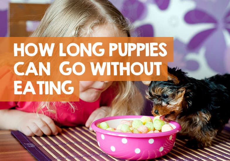 how long can a puppy go without eating