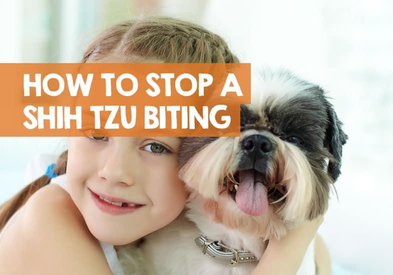 how to stop a Shih Tzu biting