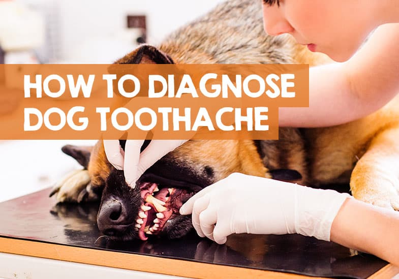 how to know if your dog has toothache