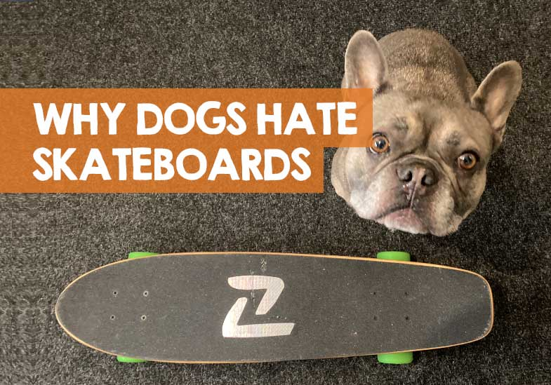 why do dogs hate skateboards