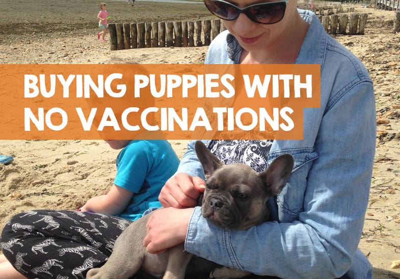should you buy a puppy without vaccinations