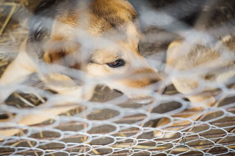 How to stop a dog from digging under chain link fence