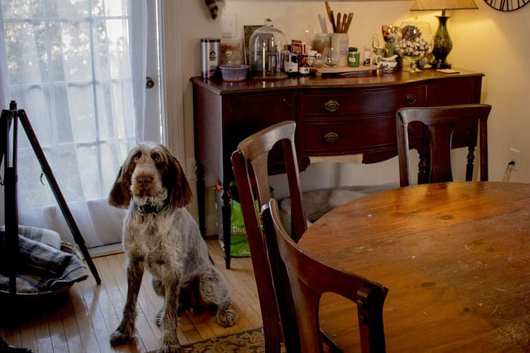 how to stop a dog stealing food from the table