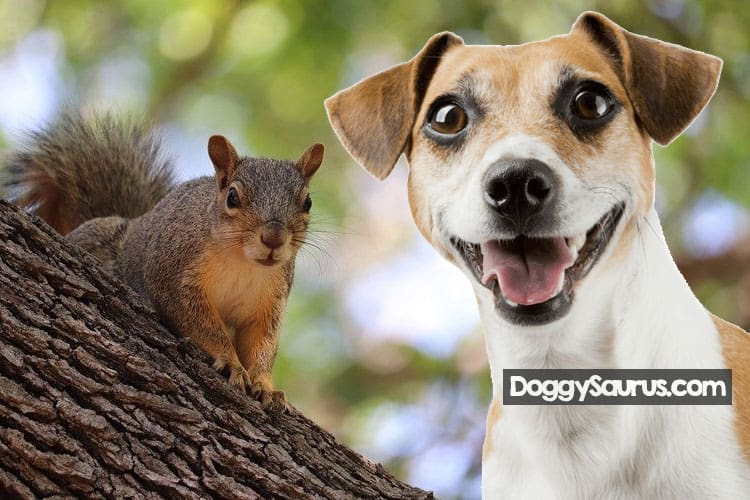 why do dogs hate squirrels