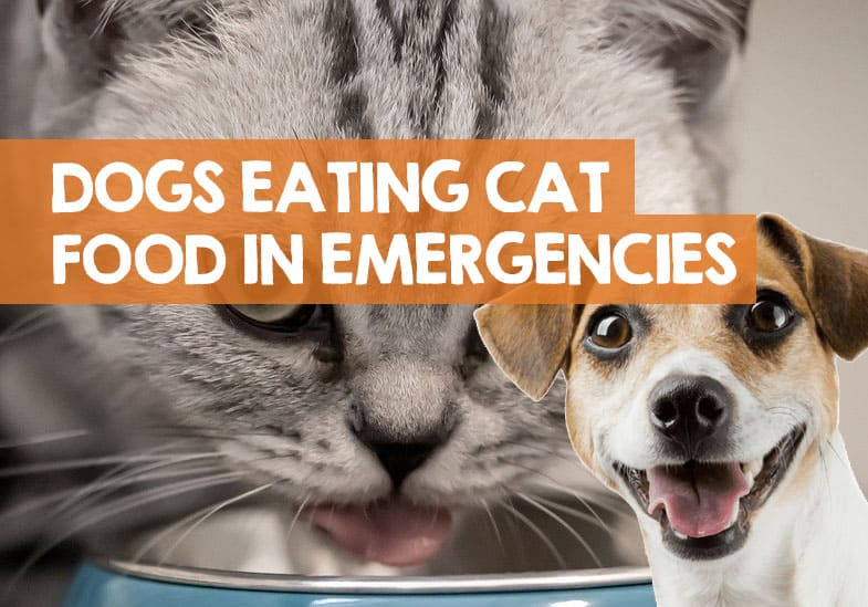 Can You Feed A Dog Cat Food in an Emergency