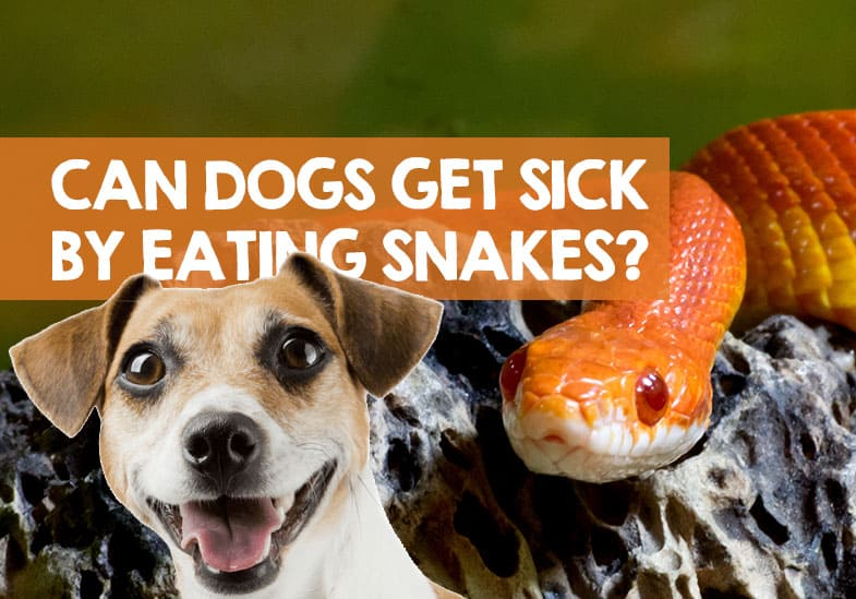 Can Dogs Get Sick from Eating Snakes
