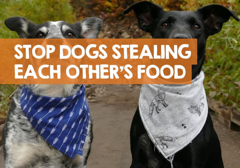 How to Stop a Dog Stealing Food from Other Dogs