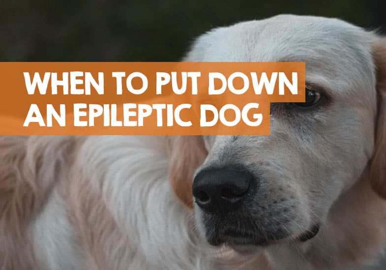 When to put down a dog with epilepsy