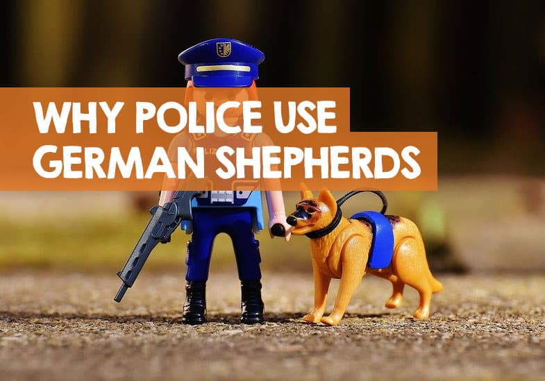 Why are german shepherds used as police dogs