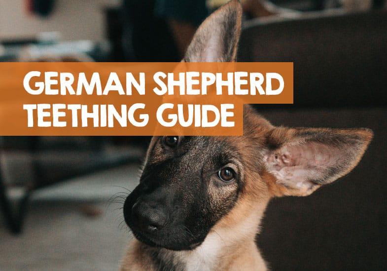 German shepherd puppy teething