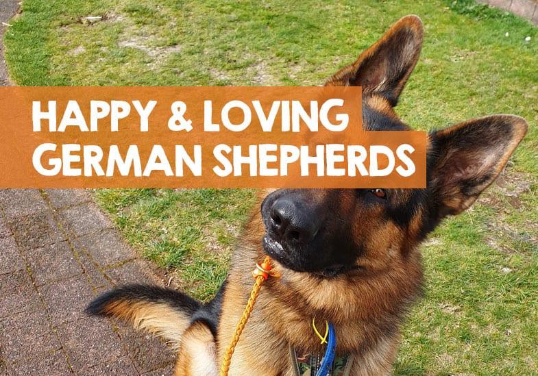 German shepherd loves me