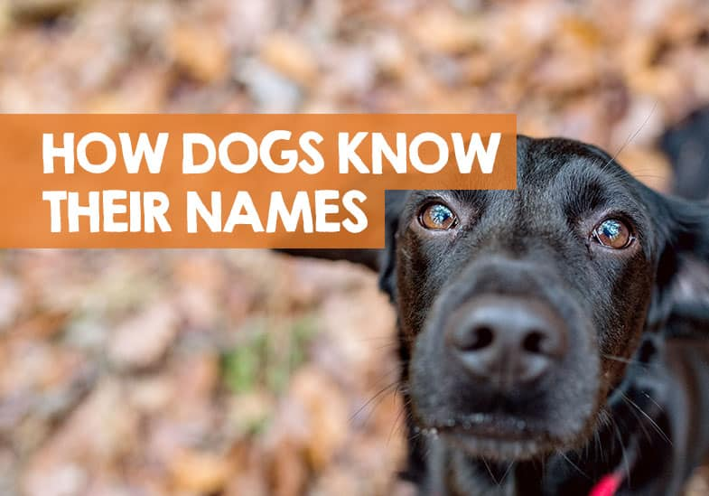 How do dogs know their name