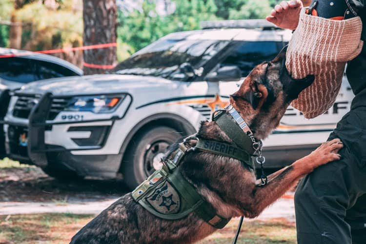 How long does it take to train a k9 police dog