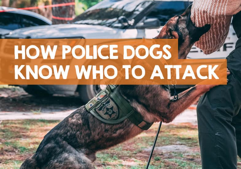How Do Police Dogs Know Who to Attack