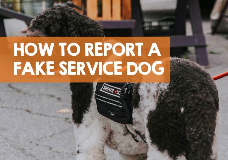 How do you report a fake service dog