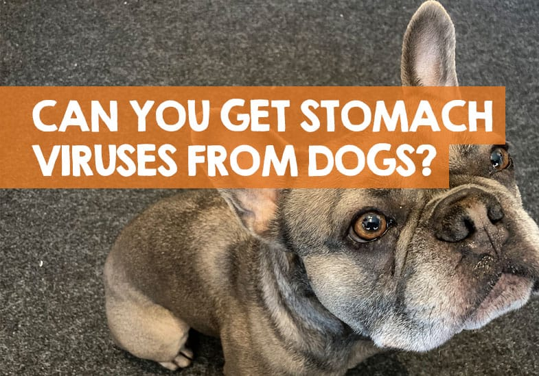 can you catch a stomach virus from a dog
