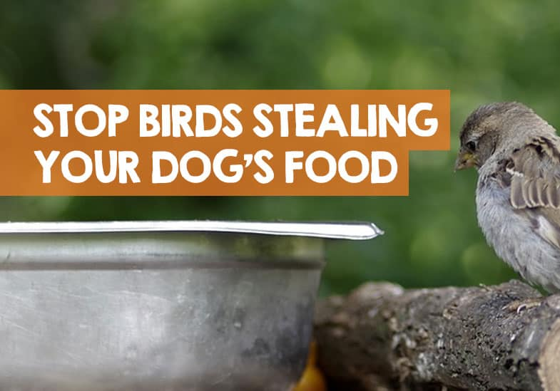 how to stop birds stealing dog food