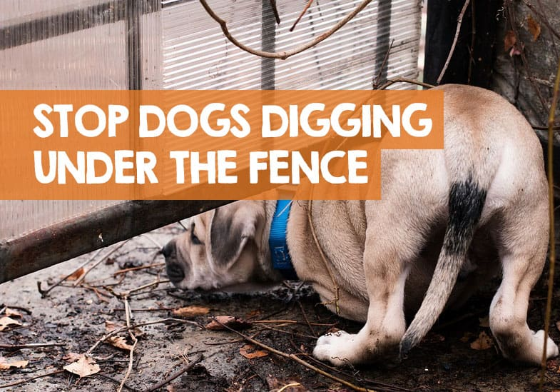 how to stop a dog digging under the fence