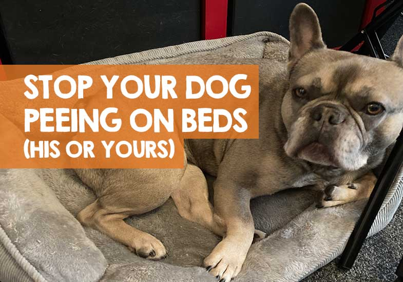 how to stop a dog from peeing on the bed