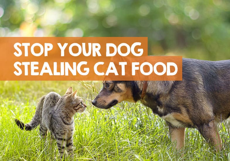 How to Stop a Dog from Stealing Cat Food