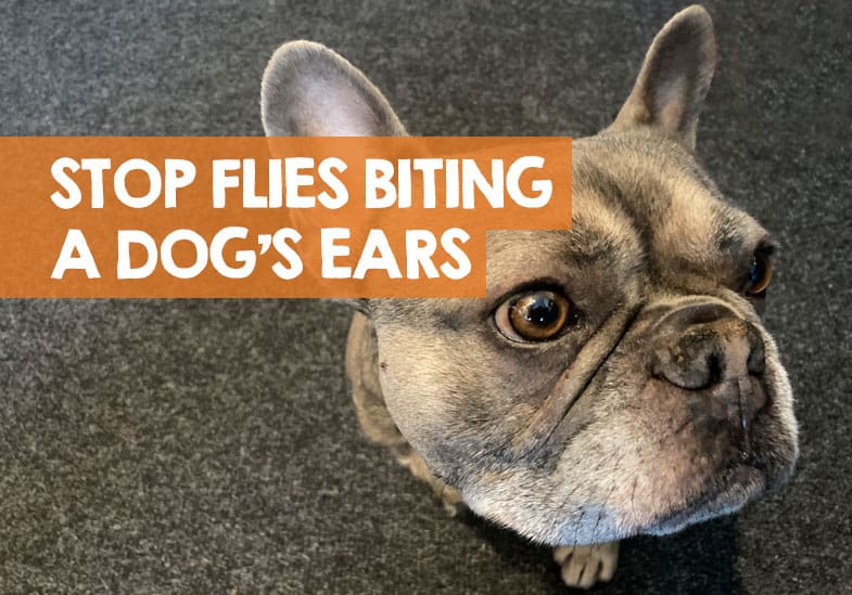 how to stop flies biting dog ears