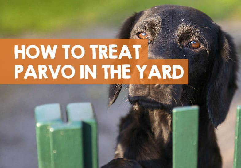 how to treat yard for parvo