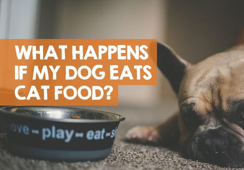 What Happens if My Dog Eats Cat Food