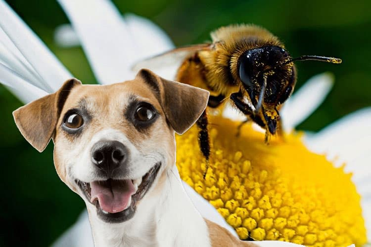 can bee stings kill dogs