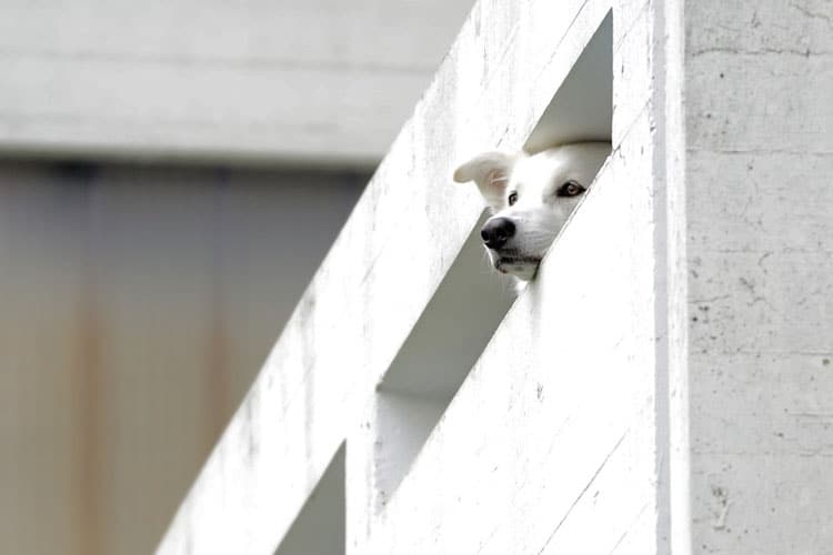 can puppies fall off balconies