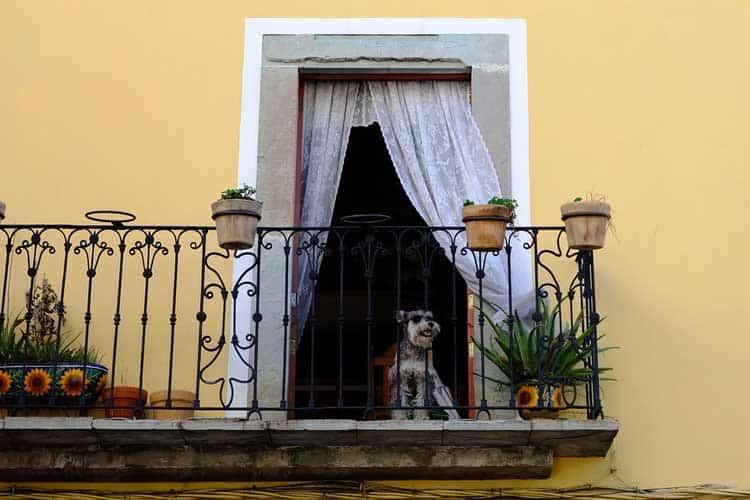 how do you pet proof a balcony