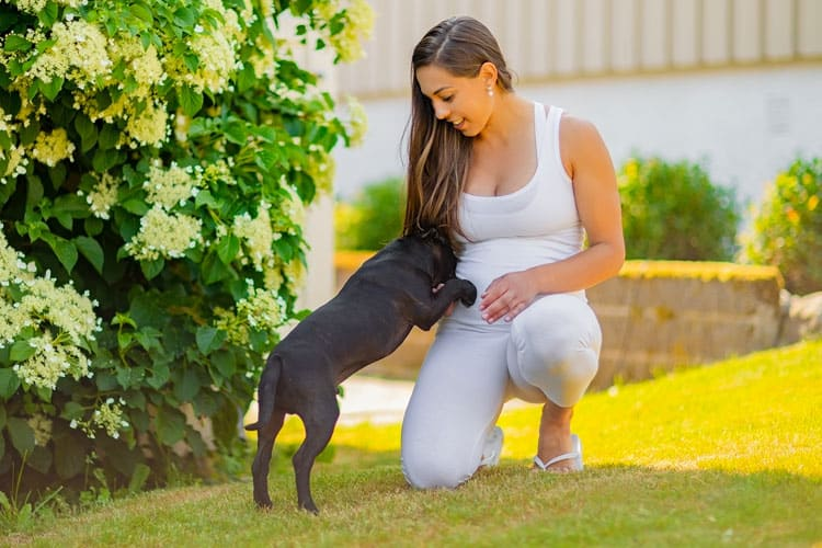 dogs can smell baby in your stomach